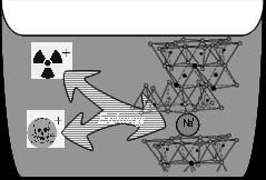 イオン交換体で有害イオンを除去する
