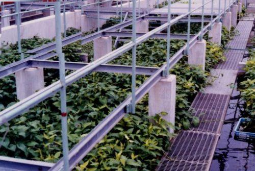 植物や微生物を活用した環境浄化・保全に関する研究